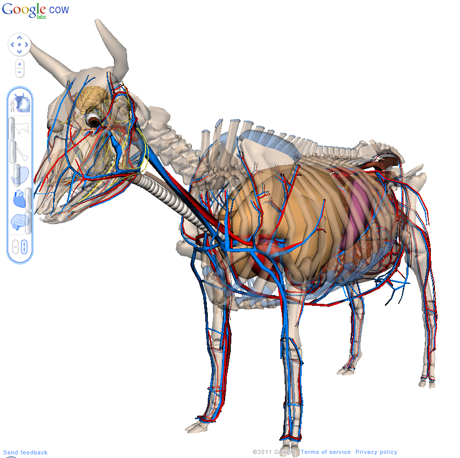 Google Body, Cow Edition